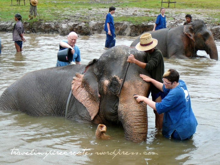 Elephants in Chiang Mai | Travel Inspire Create