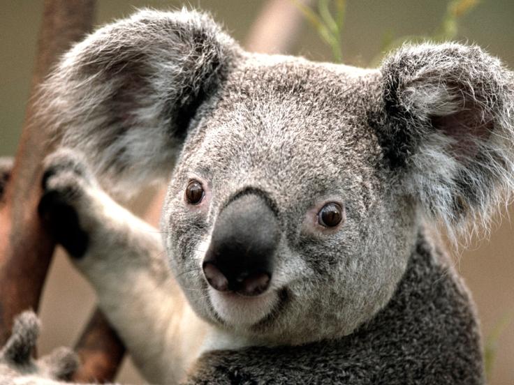 Australia   Travel Inspire Create