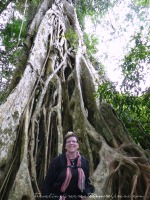 Big strangling fig tree in Khao Yai National Park (Thailand)