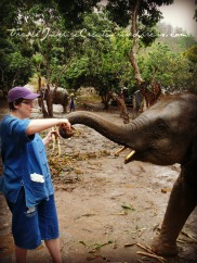 Day with the elephants in Thailand