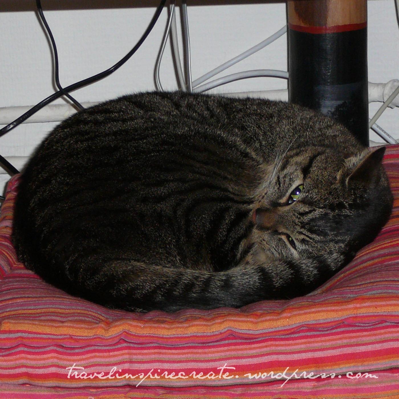 Sam - my cat