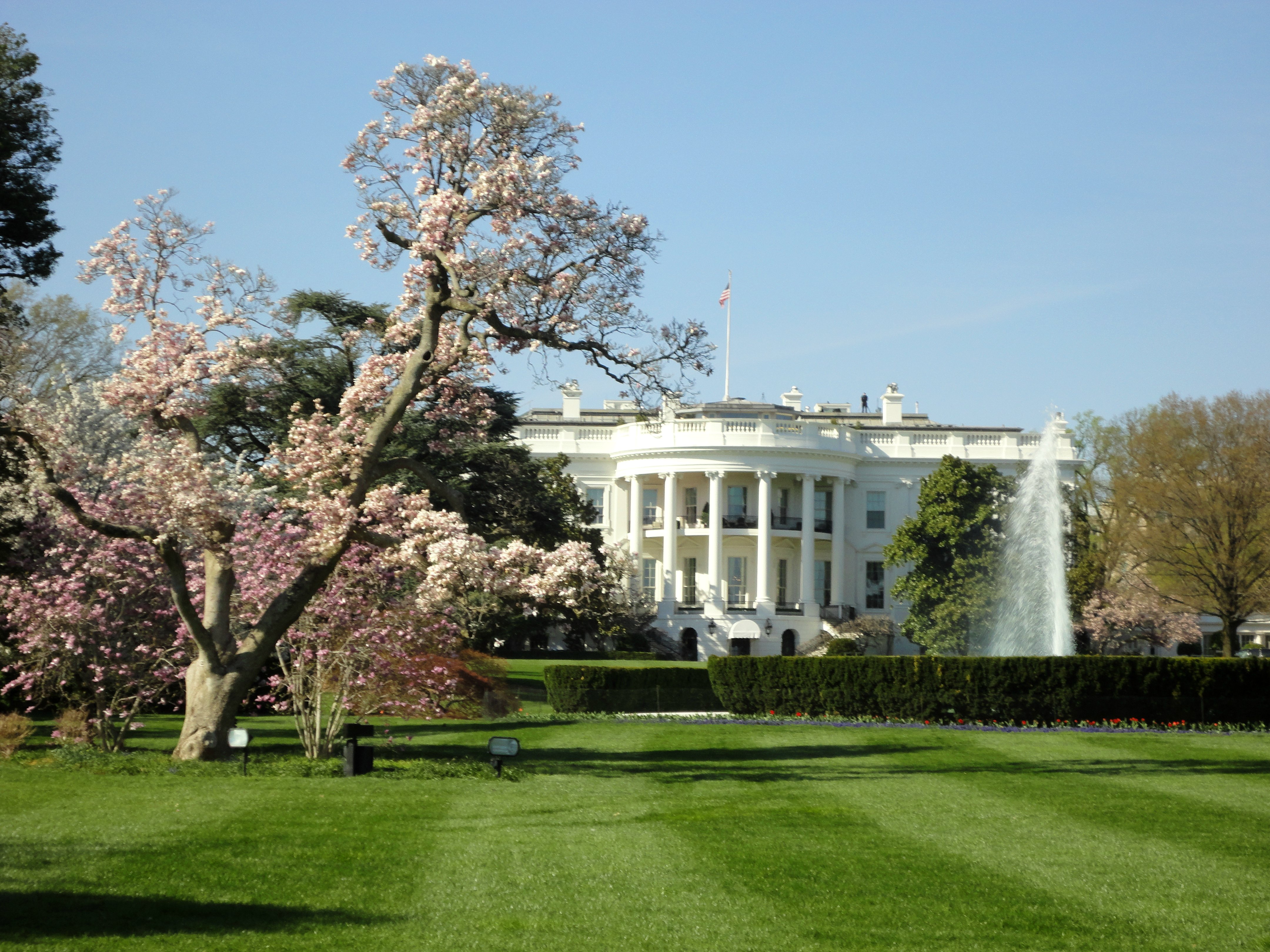 Cherry Blossom House /04/white-house-and-cherry